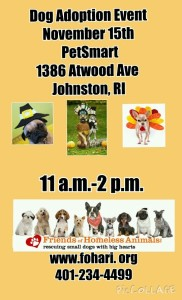 Fall Adoption Event @ PetSmart - Johnston | Johnston | Rhode Island | United States