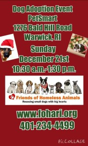 Give a Dog a Home for the Holidays Adoption Event @ Petsmart | Warwick | Rhode Island | United States