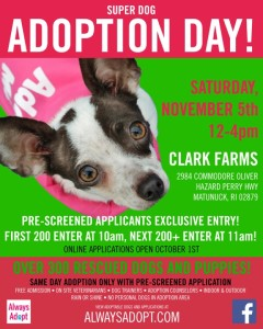 Always Adopt @ Clark Farms | South Kingstown | Rhode Island | United States