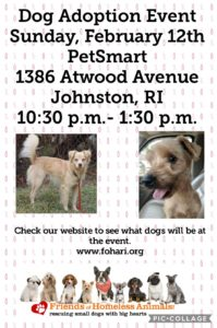 Find True Love Adoption Event @ Petsmart | Johnston | Rhode Island | United States