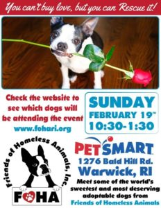Love is in the Air Adoption Event @ Petsmart | Warwick | Rhode Island | United States