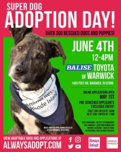 Super Dog Adoption Day @ Balise Toyota | Warwick | Rhode Island | United States